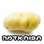 תפוח אדמה